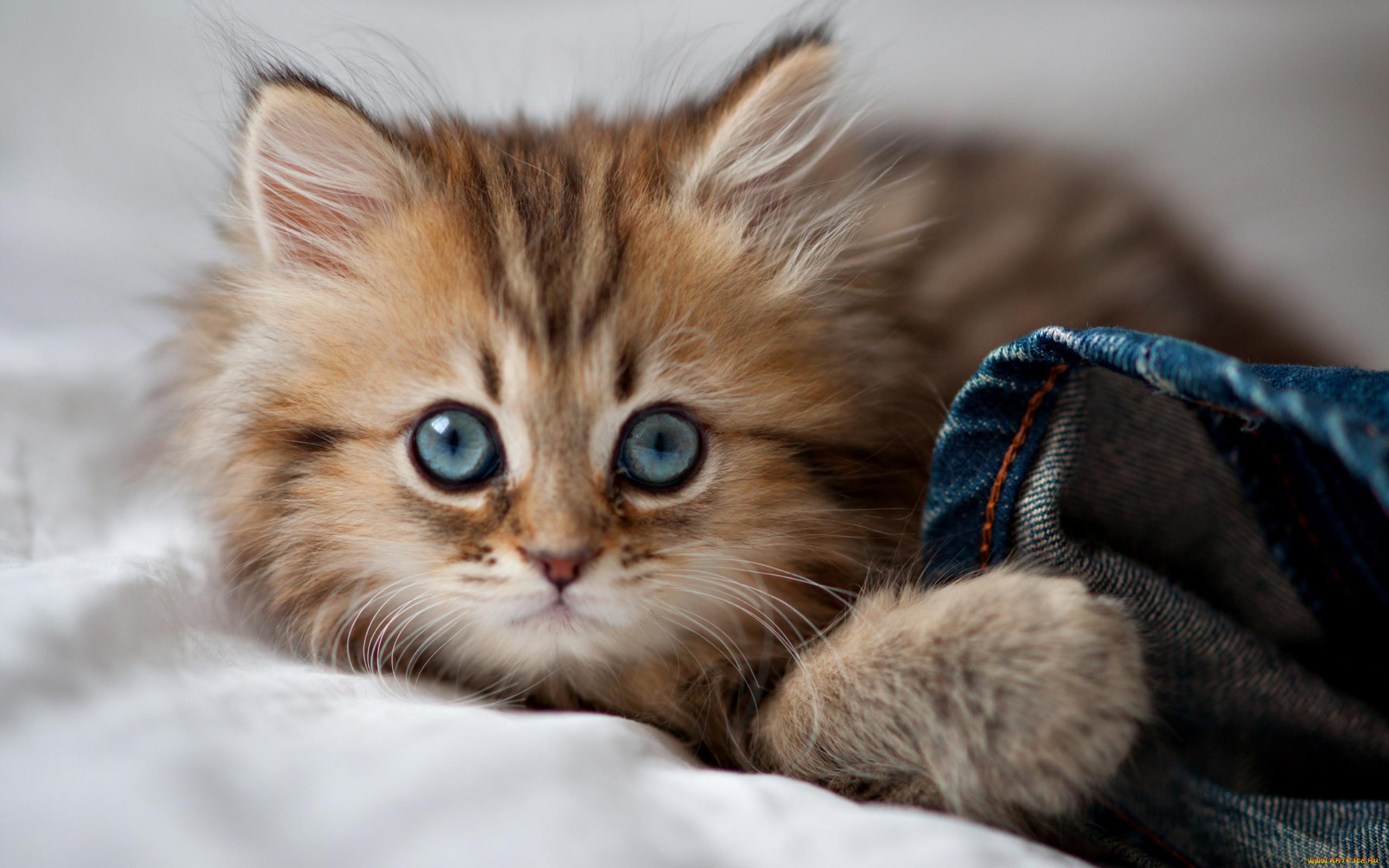 считаю, картинки котов самые красивые принесла краскам только